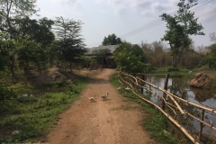Don Khon - Ducks Crossing