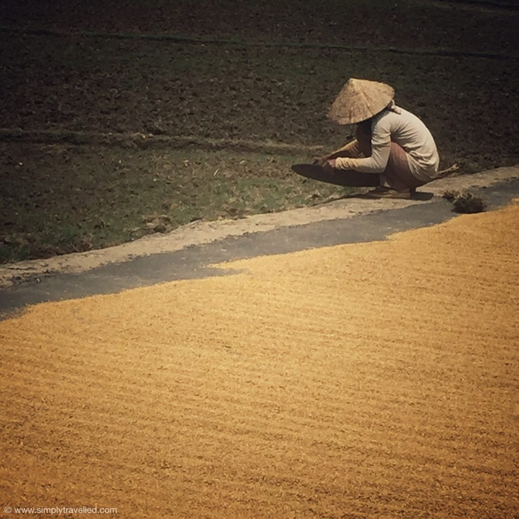A local rice farmer