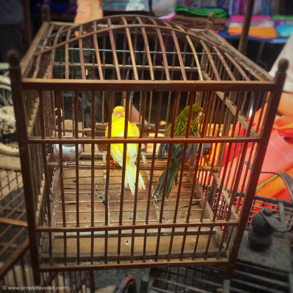 What to do in Xian - Be sure to check out the bird market and let us know what you think