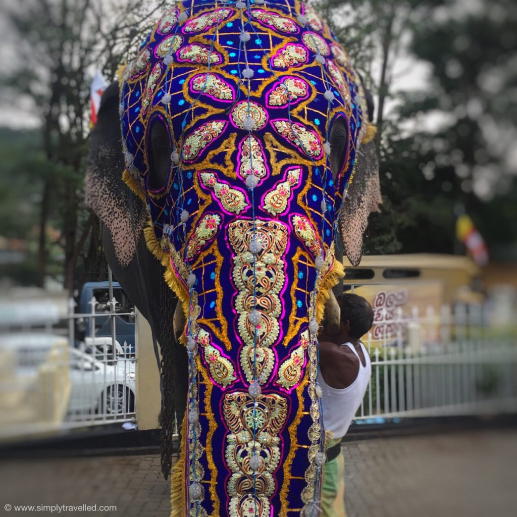 Esala Perahera - The elephants are beautiful!