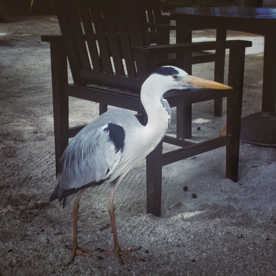 Maldives Beach Resort - Meet Mr. Crane!