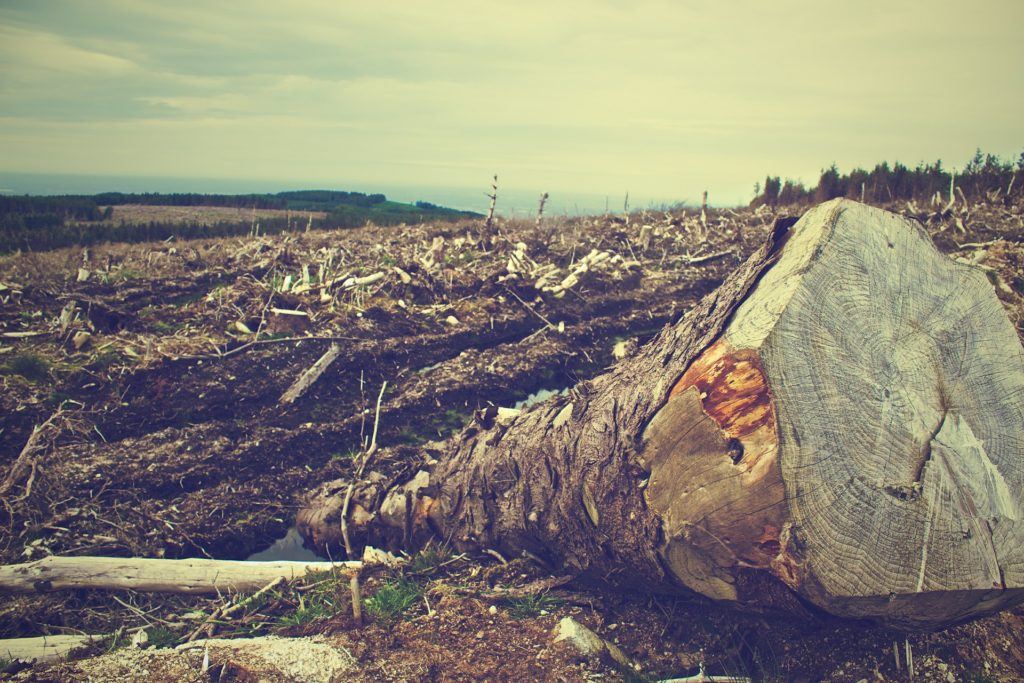 A healthy vegetarian diet - Animal agriculture is a major cause of deforestation