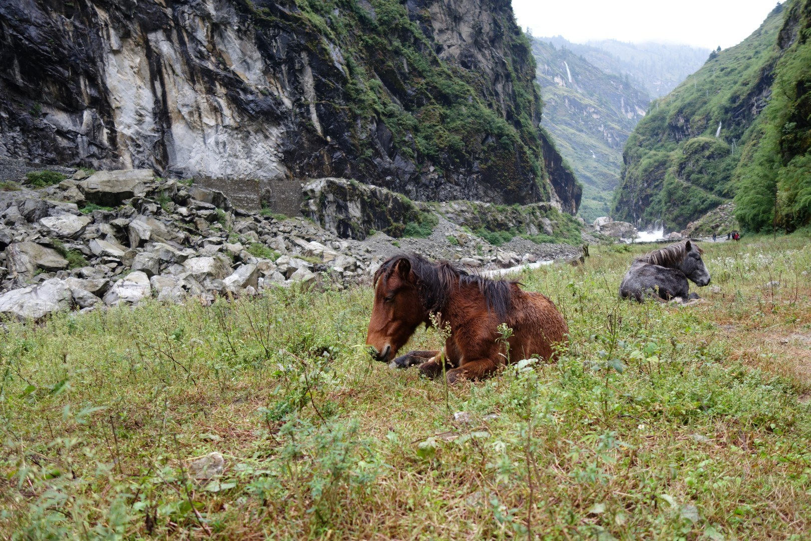 The beautiful wild horses of Tal - Annapurna Circuit route