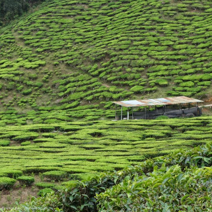Explore the fields before retreating to taste a cup - Malaysia Getaway