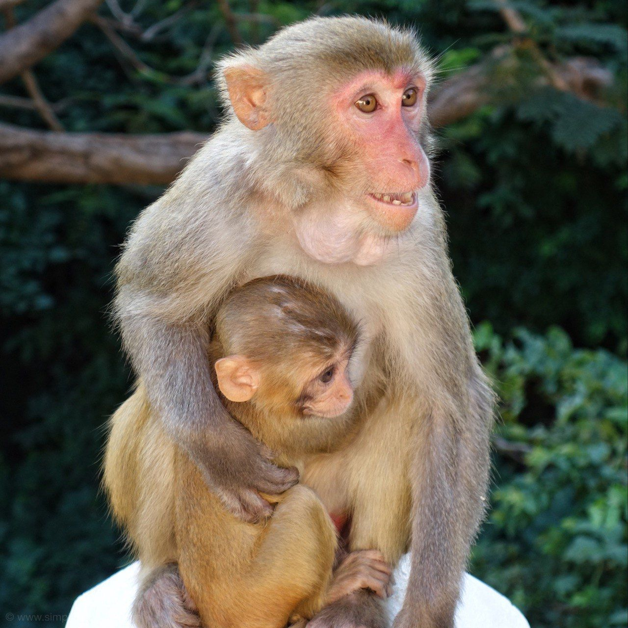 They may look sweet, but beware of the monkey's! The Best Myanmar